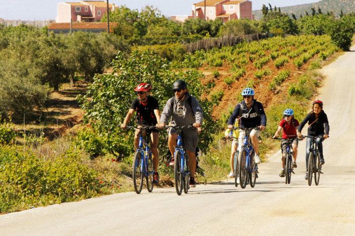 Vineyards Bike Tour